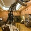 От архея до музея... Палеонтологическая экскурсия