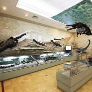 Интерактивная программа «По следам древних животных» 2020 фотографии