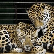 Казанский зооботанический сад фотографии