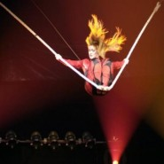 Новогоднее представление «Новый год и Цирк зверей» 2019/20 фотографии