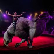Цирковое шоу «Дикая планета» 2021 фотографии