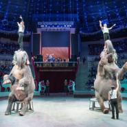 Цирковое представление «Гигант-шоу» 2019 фотографии