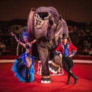 Цирковая программа «Шоу слонов и магия цирка» 2021 фотографии