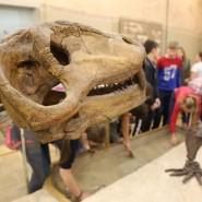 Всемирный День животных в Музее естественной истории Татарстана 2019 фотографии