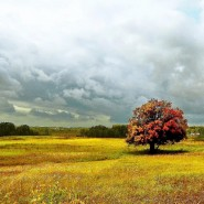 Выставка «Природа Татарстана: четыре времени года» фотографии