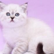 Международная выставка кошек 2021 фотографии