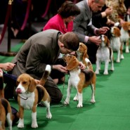Выставка собак «Осенний кубок КФРТ 2017» фотографии