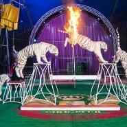 Цирк-шапито «Корона» 2017 фотографии