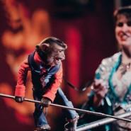 Шоу Новосибирского Цирка «Золотой Дракон» 2017 фотографии