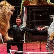 Большое цирковое шоу 2020 фотографии