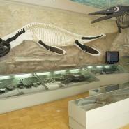 Занятие «Подводные лодки» морского царства» в Музее естественной истории татарстана 2017 фотографии