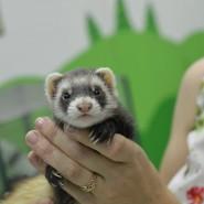 Всемирный день животных 2017 фотографии