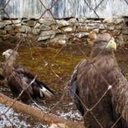 День птиц в Казанском зооботсаду 2019 фотографии