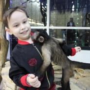 Удивительный зоопарк фотографии