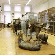 Зоологический музей им. Э.А.Эверсмана фотографии