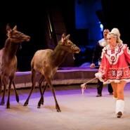 Цирковое шоу «Браво» 2018 фотографии
