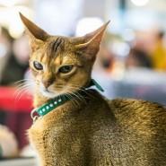 Международная выставка кошек 2018 фотографии