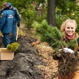 День посадки леса а Казани 2019