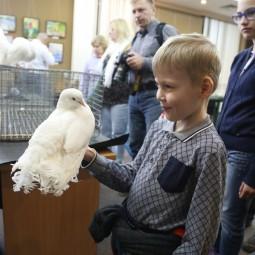 Выставка декоративных голубей 2018