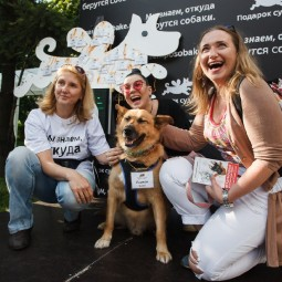 Выставка собак «Осенний кубок КФРТ 2017»