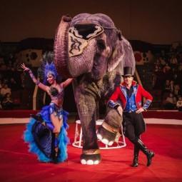 Цирковая программа «Шоу слонов и магия цирка» 2021