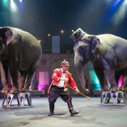 Цирковое шоу «Слоны и тигры» 2018