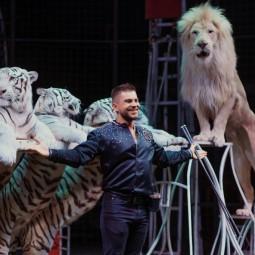 Цирковое шоу «Тигры, львы и Якутский цирк» 2020