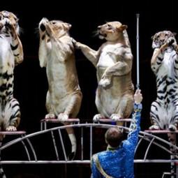 Цирковое шоу «Империя львиц» 2018