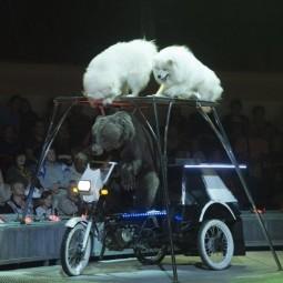 Цирковое представление «Осенний калейдоскоп» 2019