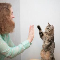 Международная выставка кошек 2021