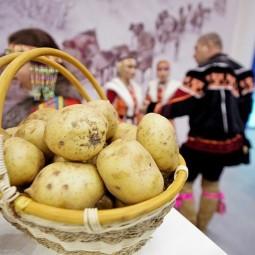 Праздник картошки или «Бәрәңгефест» 2019