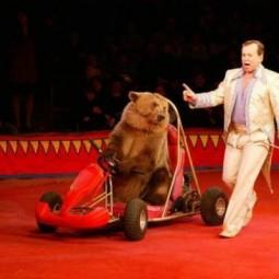 Новогоднее представление «Новый год и Цирк зверей» 2019/20