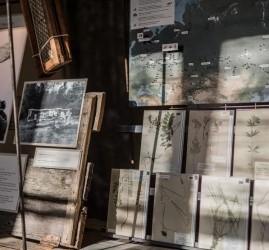 Выставка «Засушенному — верить»