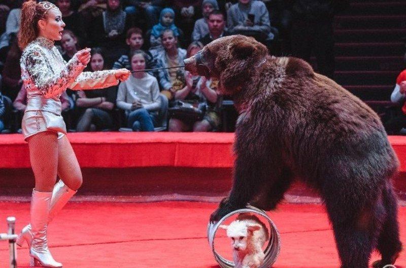 Цирковая программа «Фиеста» 2018