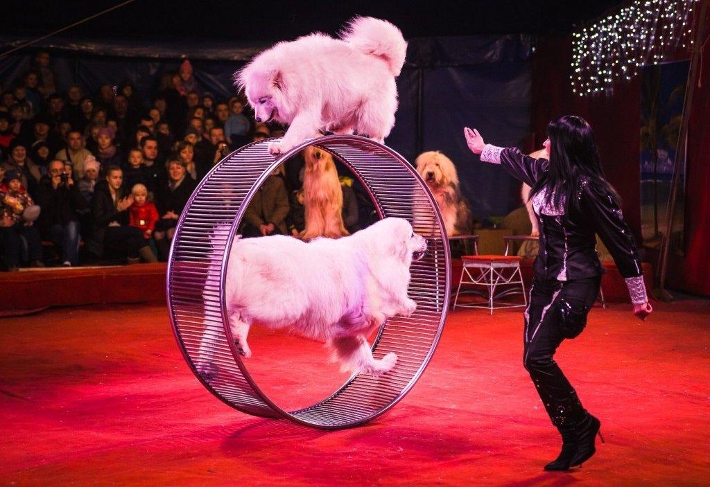 Шоу Новосибирского Цирка «Золотой Дракон» 2017
