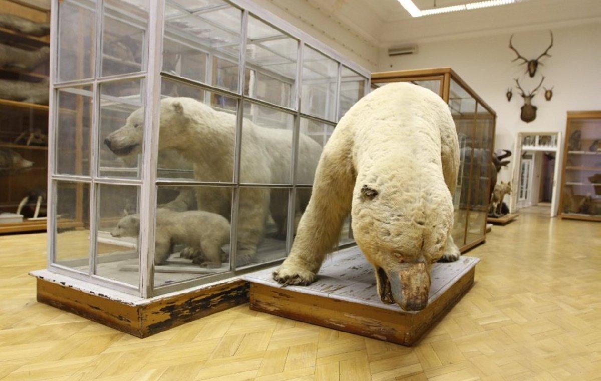 Зоологический музей им. Э.А.Эверсмана