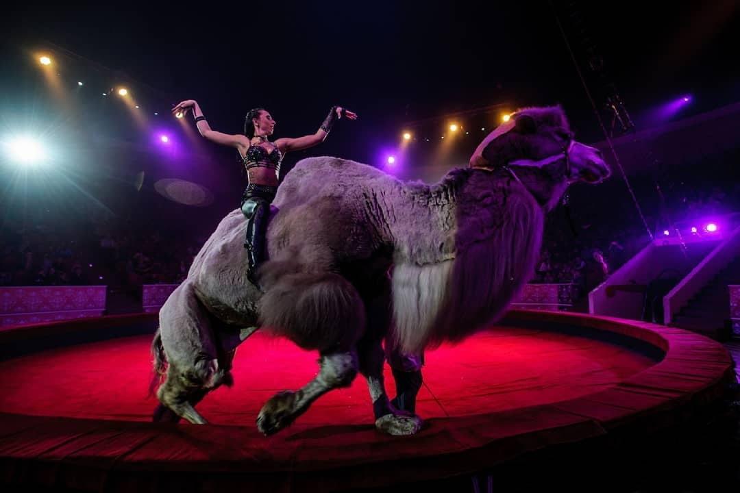 Цирковое шоу «Дикая планета» 2021