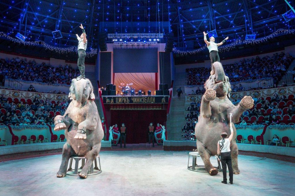 Цирковое представление «Гигант-шоу» 2019