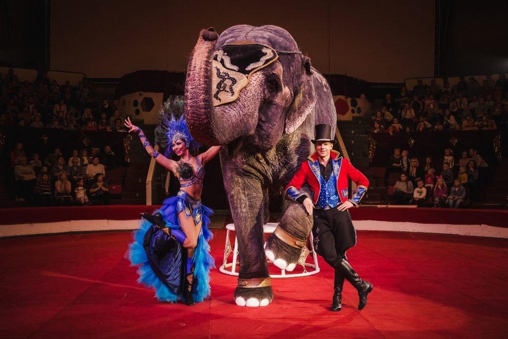Цирковая программа «Шоу слонов имагия цирка» 2021