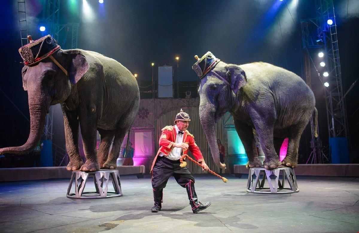 Цирковое шоу «Слоны итигры» 2018