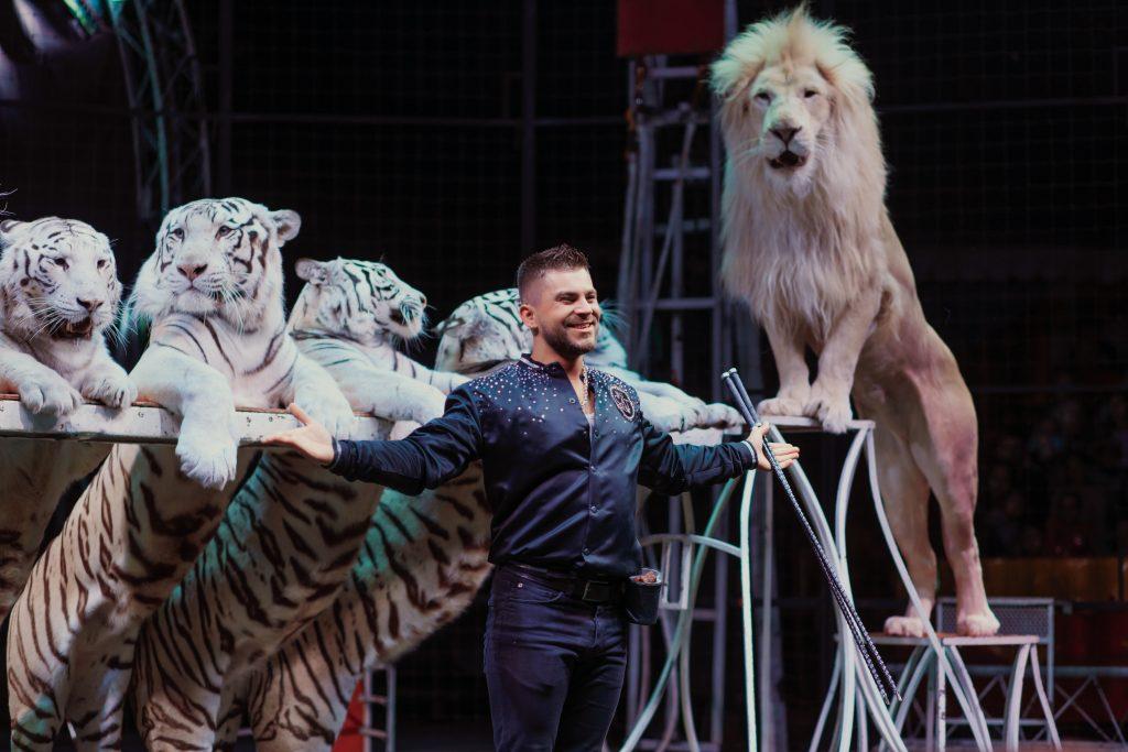 Цирковое шоу «Тигры, львы иЯкутский цирк» 2020