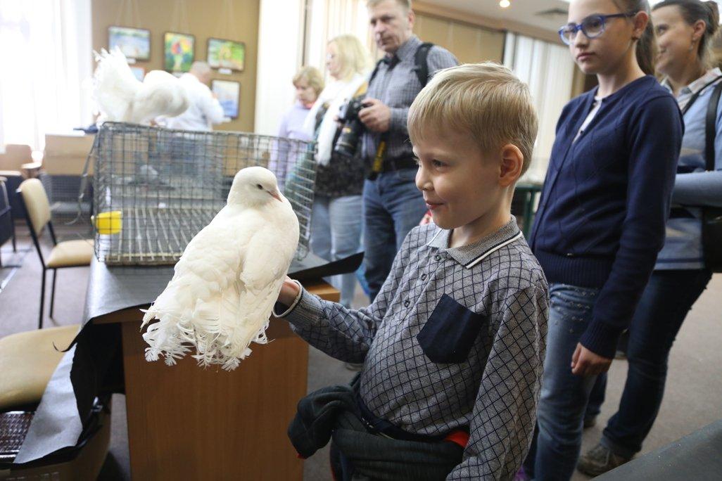 Выставка голубей 2017