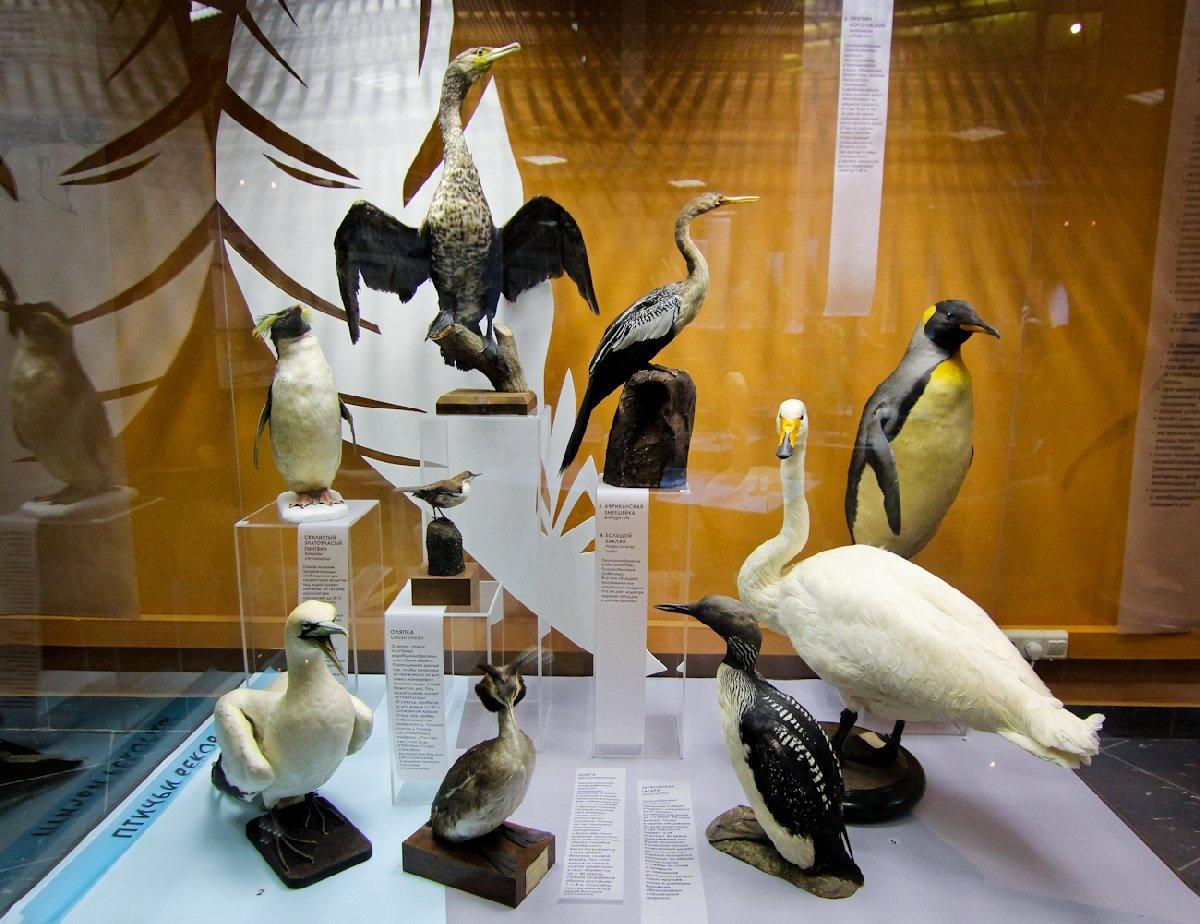 Выставка «Птицы. Технология совершенства»