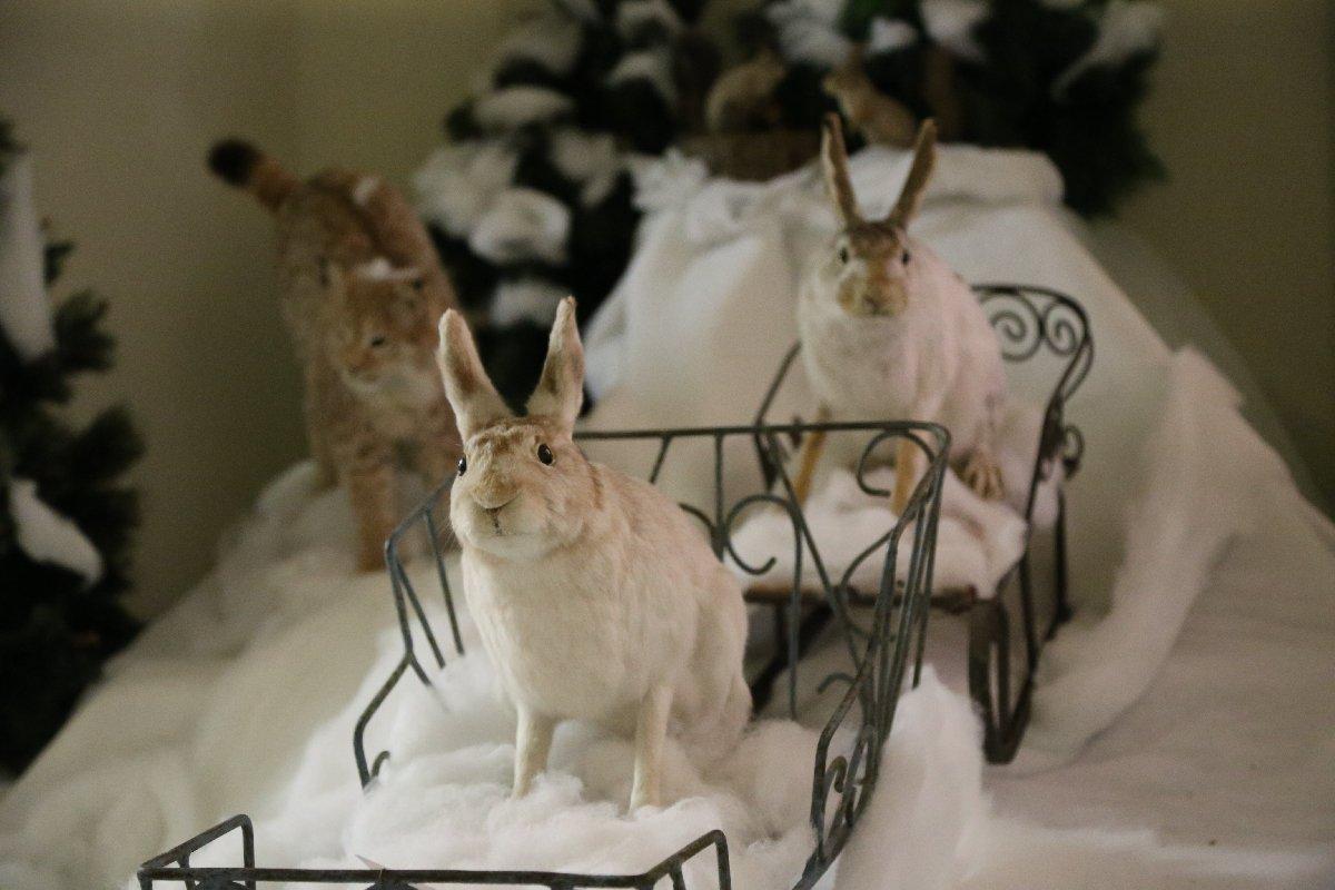 Выставка «В снежном царстве, вморозном государстве»