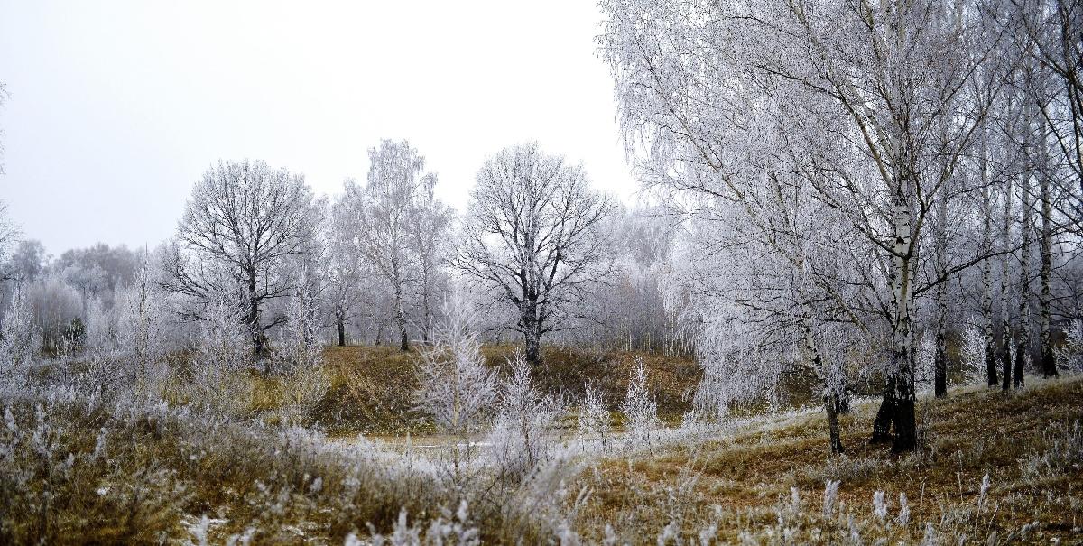 Выставка «Природа Татарстана: четыре времени года»