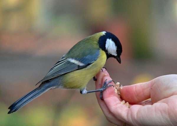 День птиц вКазанском зооботсаду 2019