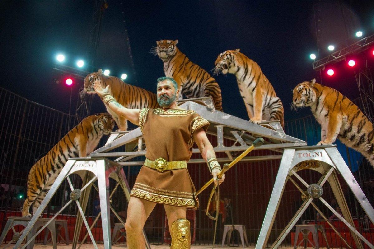 тля, картинки артисты цирка животные ведь проецировать фото