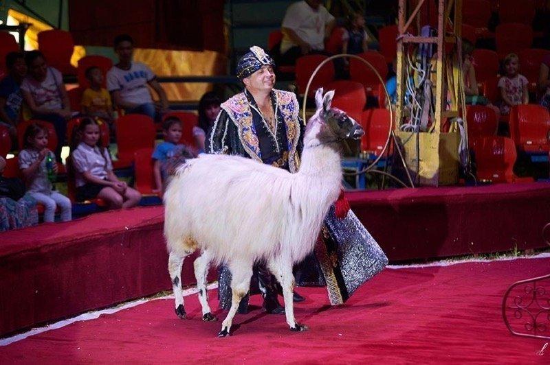 Цирк-шапито «Корона» 2017