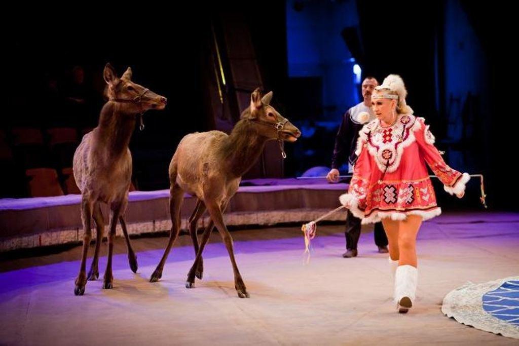 Цирковое шоу «Браво» 2018